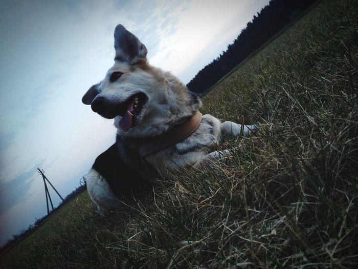 I Love My Dog Cute Pets Hello World Lithuania Eyem Best Shots