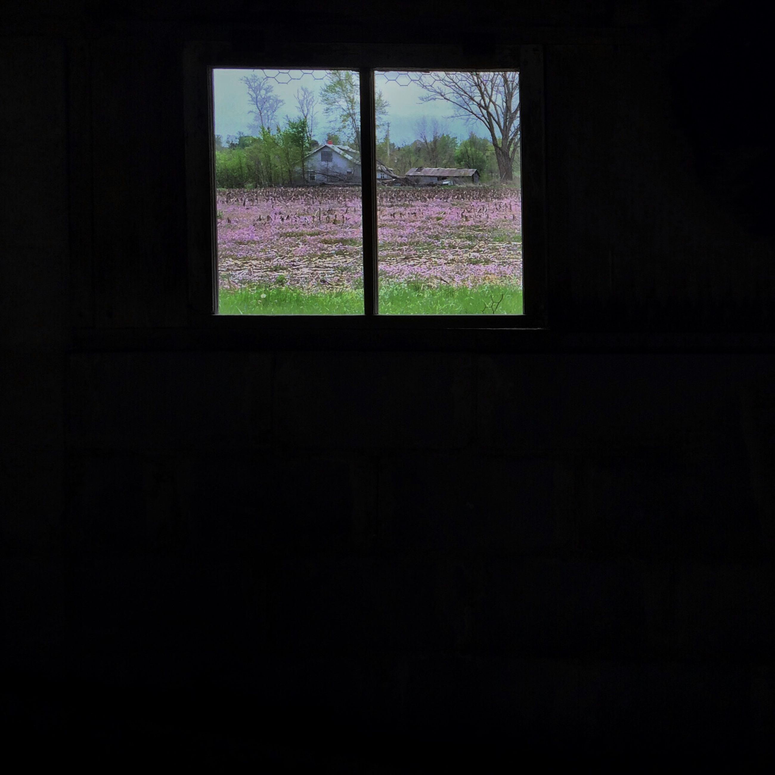 window, indoors, glass - material, transparent, architecture, built structure, house, tree, dark, no people, home interior, day, building exterior, looking through window, glass, residential structure, wall - building feature, sunlight, door, open