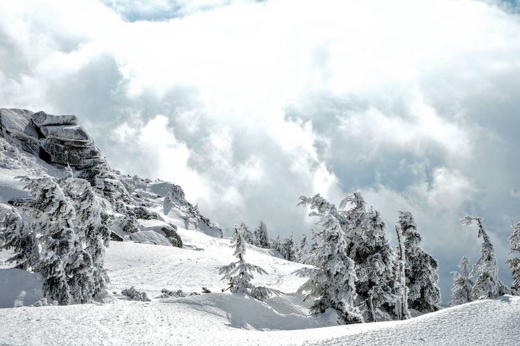 Szrenica Summit, Karkonosze Cloud Beauty In Nature Cloud - Sky Cold Temperature Day Environment Landscape Mountain Mountain Peak Nature No People Non-urban Scene Outdoors Pine Tree Plant Range Scenics - Nature Sky Snow Snowcapped Mountain Tranquil Scene Tranquility Tree White Color Winter