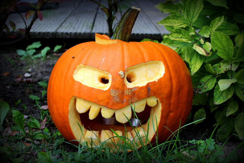 Anthropomorphic Face Art Close-up Creativity Day Focus On Foreground Grass Green Color Growth Halloween Halloween Halloween Art Halloween Decorations Jack O Lantern Nature No People Orange Color Outdoors Plant Pumpkin