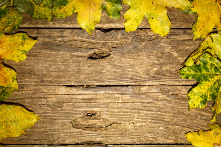 Close-up of leaves on wooden plank