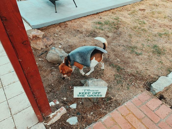 High angle view of person with dog