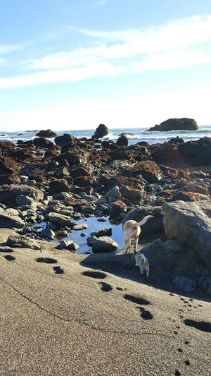 Check This Out Hanging Out Tidepools Crescent City Enjoying Life Beach Bum Beautiful Day Northern California Beach Life Dogslife Frolicking My Best Friend Playing In The Sand Beautiful