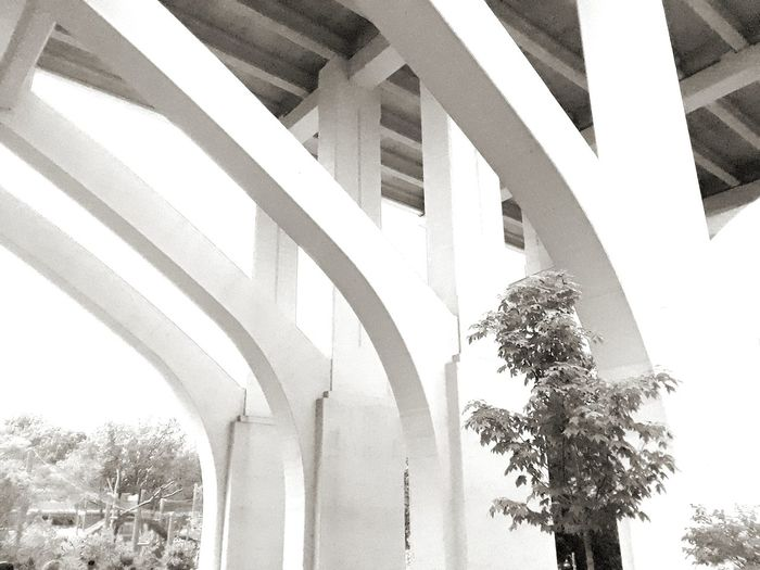 Architecture Bridge - Man Made Structure Day Tree Outdoors Ohio Ohio, USA Clevelandmetroparks Cleveland Zoo Blackandwhite Black & White Black And White Summer No People Landscape