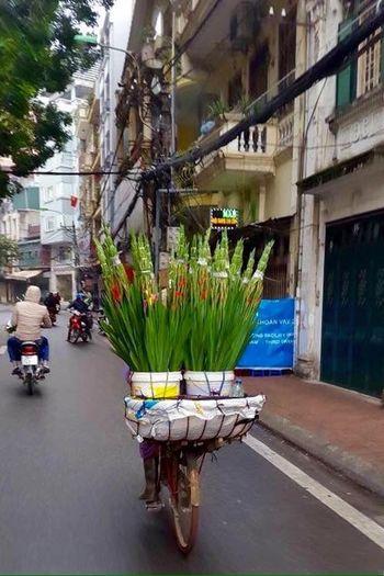 Flowers Flowers On Bike Street Vendor Flower Seller Selling Flowers Hanoi, Vietnam Amatuer Photographer