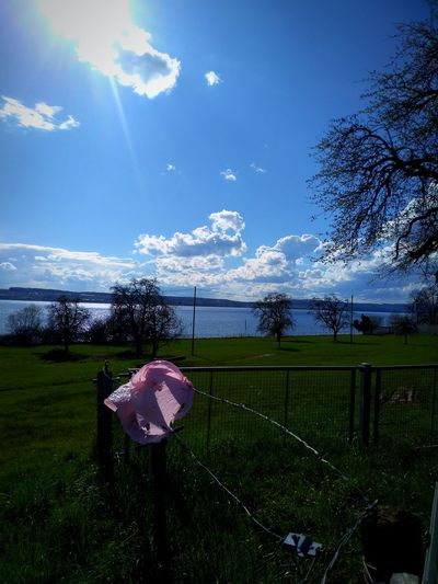 Lake Constance Blue Sky Approaching From Another View No People Sunlight Meadow Landscape Pink Plastic Tree Sky Grass Cloud - Sky End Plastic Pollution