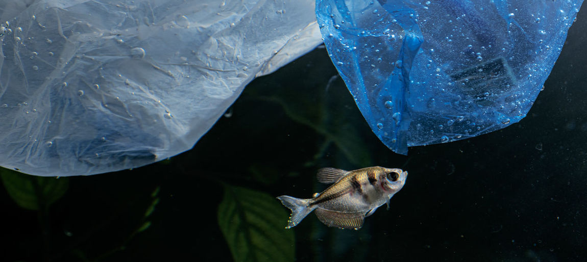 Fish swimming in water under plastic trash