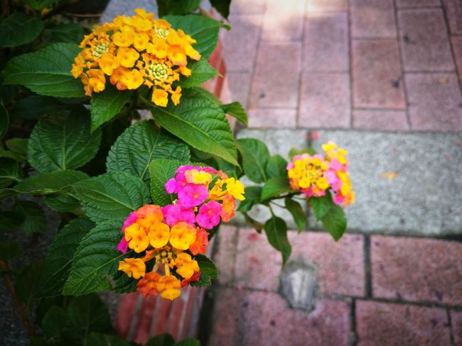 EyeEm Selects Flower Freshness Fragility Petal Outdoors Yellow Day Plant Nature Growth Blooming Leaf No People Multi Colored Way Togo