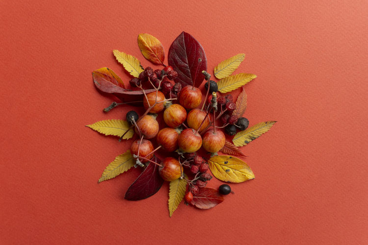 High angle view of fruit on table against red background