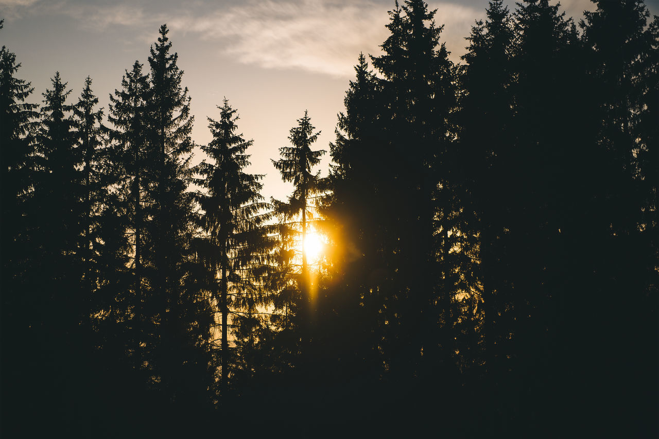 tree, plant, sky, beauty in nature, sunset, tranquility, silhouette, growth, sunlight, tranquil scene, nature, no people, sun, sunbeam, scenics - nature, forest, non-urban scene, lens flare, land, outdoors, coniferous tree, streaming