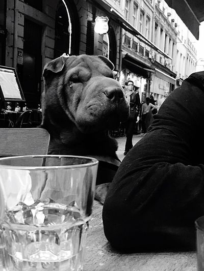 La plus belle des filles notre sharpette. Shar Pei Sharpei Black And White Noir Et Blanc Dog Dogs Animals Animal Animal Photography Restaurant Vieux Lyon  Love ♥ en Amoureuse Vieux Lyon  Sharpeilove Traboule Traboulerie Blackandwhite Black & White Blackandwhite Photography Black&white The Street Photography - 2016 EyeEm Awards The Street Photographer - 2016 EyeEm Awards