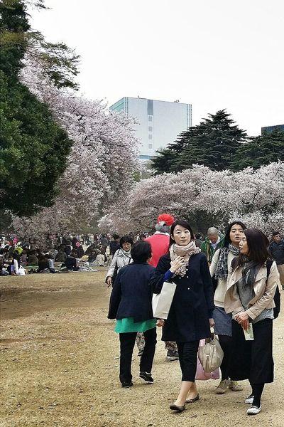 Visitors Spring2015 Sakura Shinjuku Gyoen National Garden Travel Photography Streetphotography Tokyo Japan