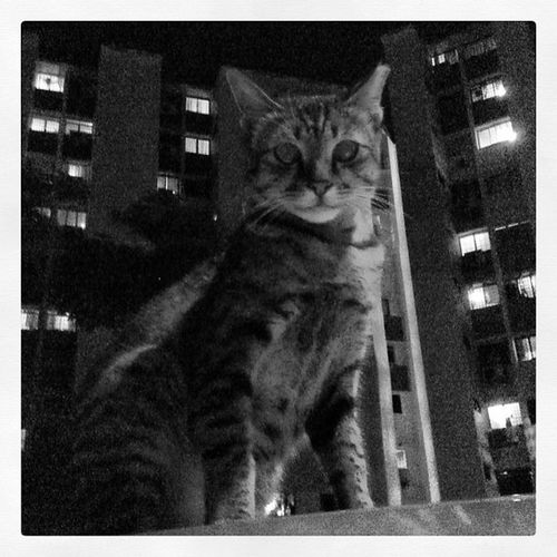 🙀😺😽🔲🔳 Webstagram Instasg Instamood Instadaily Instahappy Iphone3gs IPhoneography Instagramhub Instagrammers Photogeekdom Ig Igers Ighub Instaanimal Cat Picoftheday Pictureoftheday Photooftheday All_shots Snappeak Latergram Sgdaily Nightmadness_pg Shadowplay_pg Thismakesmehappy_pg bws_artist_asia bws_world