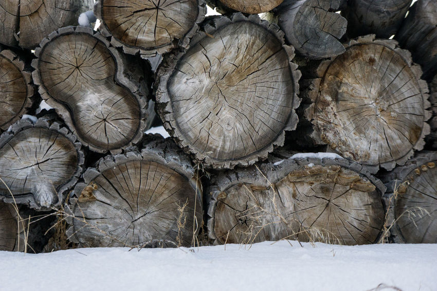 Backgrounds Cold Temperature Cross Section Day Deforestation Environmental Issues Fossil Fuel Log Logs Lumber Industry Nature No People Outdoors Snow Snow Day Stack Staying Warm Timber Winter Wintertime Wood - Material Wood Fire Wood Pile Wood Stack Woodpile Shades Of Winter