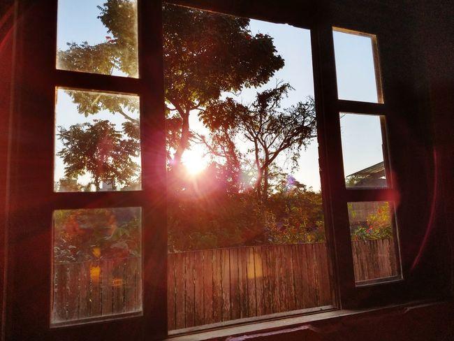 Tree Sunlight Window Sun Sunbeam Sky Close-up