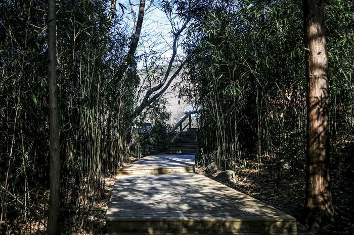 Absence Bamboo Bare Tree Branch Day Forest Grass Growth Hwaeomsa Lake Leading Narrow Nature No People Normal People Scare Me Outdoors Path Plant The Way Forward Tranquil Scene Tranquility Tree Tree Trunk Winter