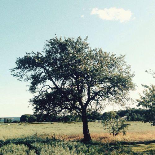 Trees Summer