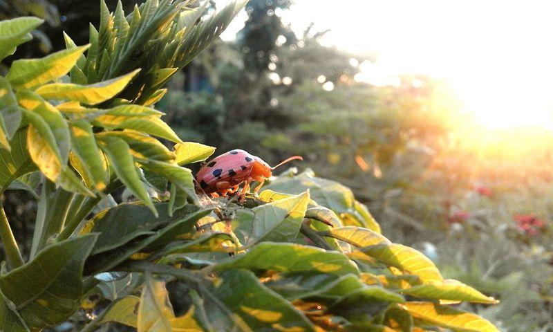 Beetles Life