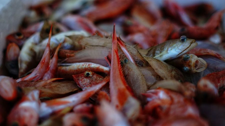 Close-up of fresh fish for sale