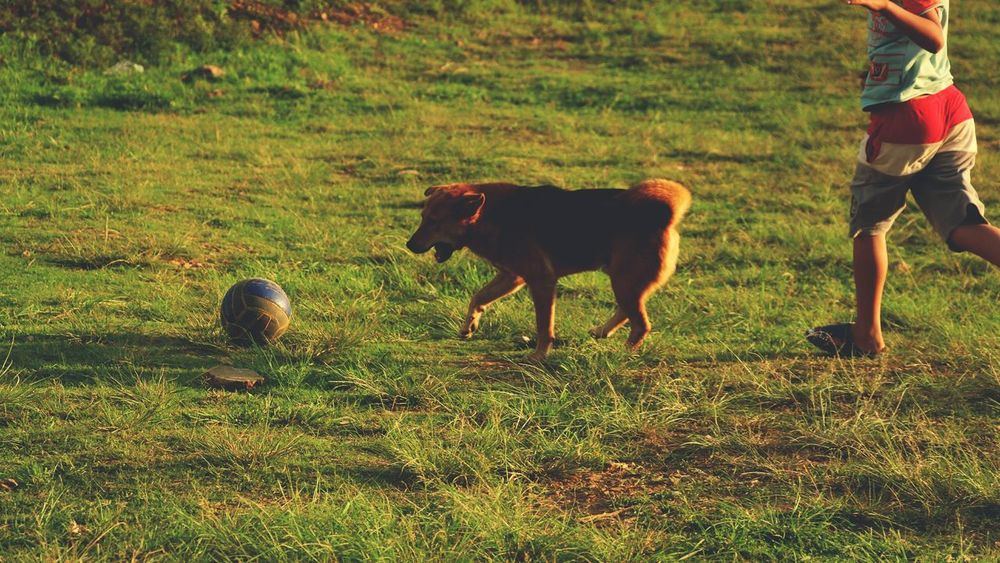 Pet Portraits Football Light Golden Golden Hour Eyeemnepal Grass Field Outdoors Green Color Togetherness Nature Pets People Animal Themes Domestic Animals Day Mammal Sunlight One Animal Childhood Sunset