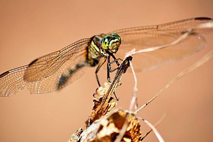Broken Wing Beautyinnature  Eyes Green Macrophotography Macro Detail Intricate BrokenWing Dragonfly Insect Animal Themes Animals In The Wild One Animal Animal Wildlife Focus On Foreground Nature No People Close-up Day Outdoors Perching Damselfly Full Length Beauty In Nature