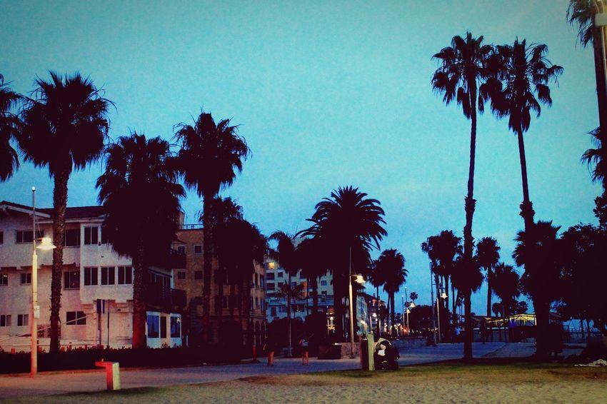 Santa Monica Beach Beach Walk Palm Trees Night Photography Live For The Story Place Of Heart The Street Photographer - 2017 EyeEm Awards