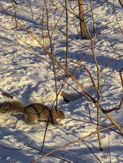 Squirrel Nature Winter Outdoors Snow Day Cold Temperature Beauty In Nature No People Tranquil Scene Tranquility Tree Scenics Landscape Arid Climate