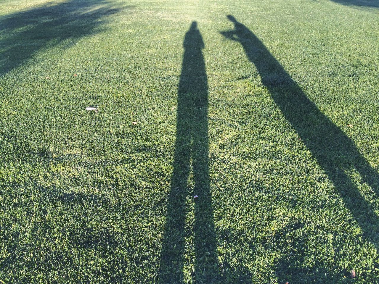 Shadow Of People On Grassy Field In Park During Sunny Day