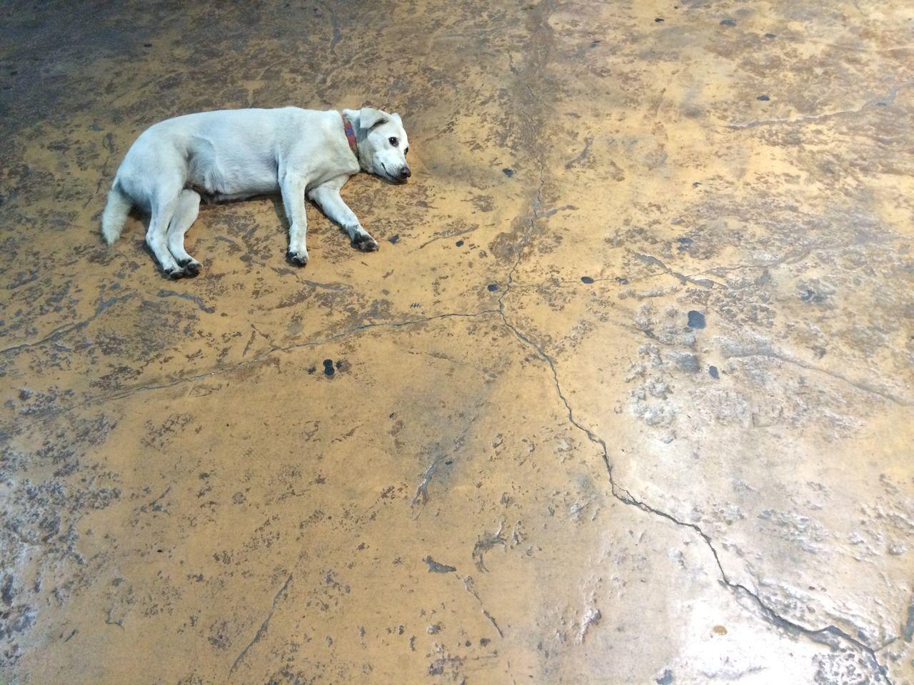 High Angle View Of Dog Lying On Footpath