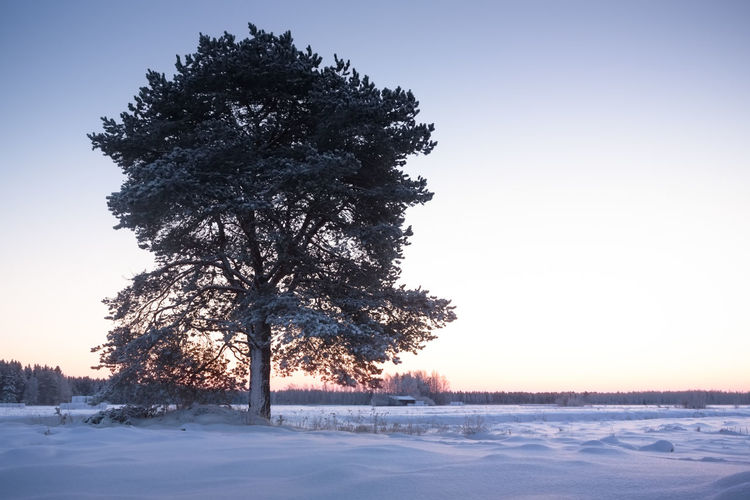 Tree On Snowy Field Against Clear Sky During Winter
