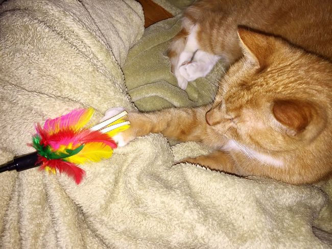 new cat toy ☺️ Colored Feathers Feathers Multi Colored 3XSPUnity TIP Loves Playing Very Much ♥️ TIP Is Purring Always Loud! 😸✨ Cat Toy Something New Cat Toy Ginger Cat