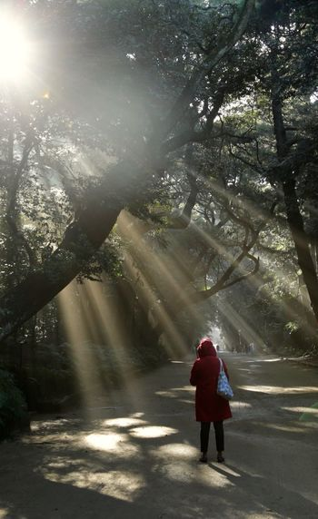 One day I found my 天使 One Person Full Length Rear View Tree Walking Real People Nature Warm Clothing Leisure Activity Women Outdoors Winter Day Beauty In Nature Adult People 雲隙光 霧 天使 穿透