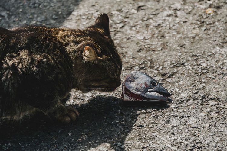 A cat examines the head of a dead fish along the waterfront in Istanbul. - IG: @LostBoyMemoirs - IG: @LostBoyMemoirs Streetwise Photography Steetphotography Street Photography The Week on EyeEm Best EyeEm Shot My Best Photo Animal Themes Animals In Captivity Mammal Cat Nature Close-up Animal Head  High Angle View Domestic CIRCLE Of LIFE The Art Of Street Photography