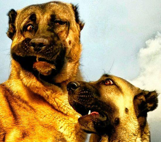 A Dogs Life Dogstagram Dogs Of EyeEm Dogs #mydog ı Love My Dogs Camera Türkiye 💙💛 Paylastikcacogalanhayat First Eyeem Photo Turkey's