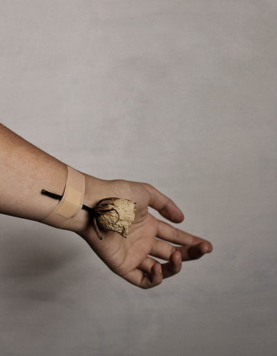 Close-up of hand with bandage and dried rose against white background