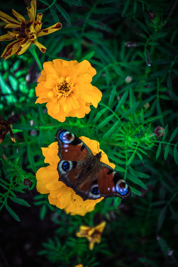 Photography Colors EyeEm Nature Nature Photography Naturelovers Flower Insect Multi Colored Nature Outdoors Butterfly - Insect Animals In The Wild Day Yellow Close-up No People Beauty Plant Flower Head Animal Themes