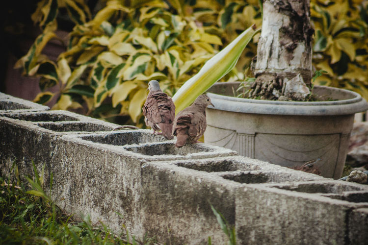 HDR Animal Themes Animal Wildlife Animals In The Wild Bird Birds Dove Hdr Cine Nature Retaining Wall