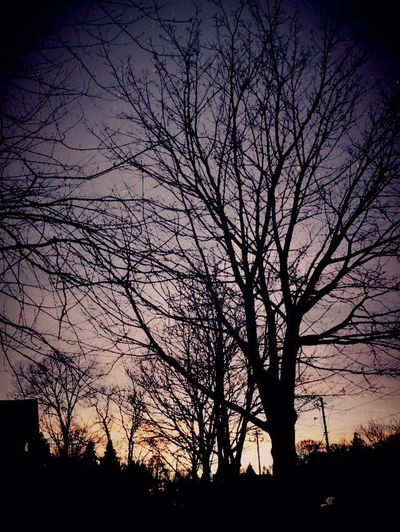Tree Trees And Sun Sunset Silhouettes Tree Silhoettes Landscape_Collection Tree_collection  Tree And Sky Tree Silhouette Treetastic Trees Tree Sunset Landscape