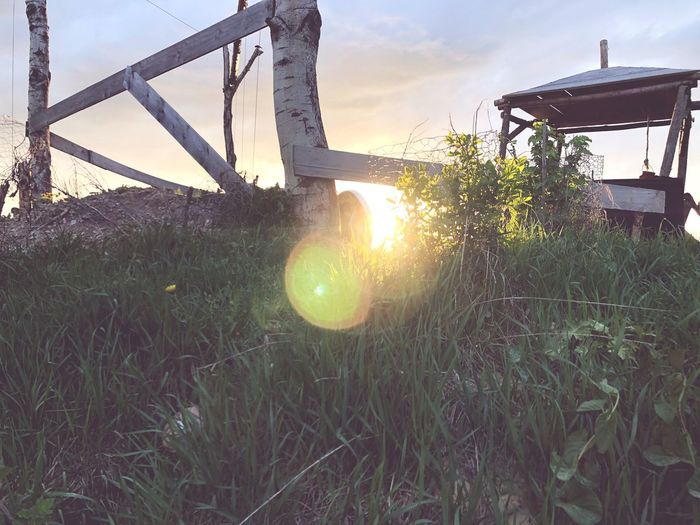 Plant Sky Nature Sunset Sunlight Lens Flare Sun Built Structure No People Day Green Color Sunbeam Land Outdoors Grass Growth Architecture Tree Playground Field