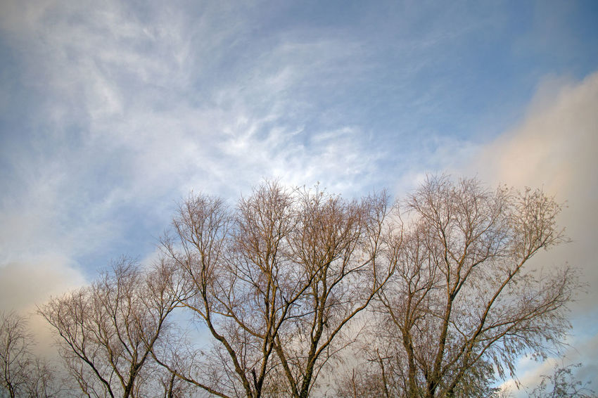 Sky Tree Cloud - Sky Low Angle View Plant No People Nature Branch Bare Tree Day Beauty In Nature Tranquility Outdoors Scenics - Nature Blue Winter Tranquil Scene Sunlight Growth Treetop