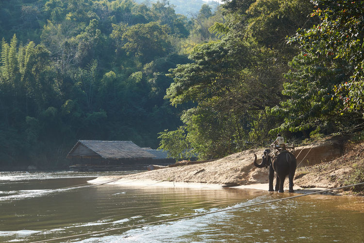 Animal Themes Beauty In Nature Day Elephant Indian Elephant Mammal Nature No People Outdoors River Kwai Thailand Tree Water
