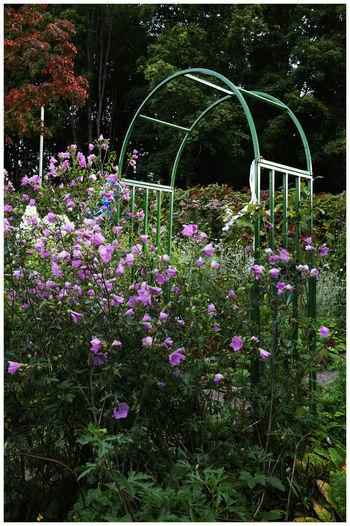 Pink flowering plants in garden