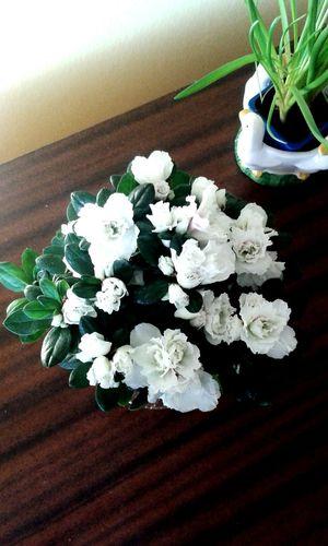 Flowers :) ^~^