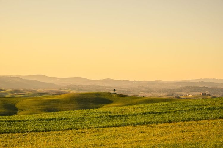 Crete Senesi Tuscany Agriculture Beauty In Nature Clear Sky Crop  Day Field Grass Green Color Growth Landscape Mountain Nature No People Outdoors Rural Scene Scenics Siena Sky Tranquil Scene Tranquility