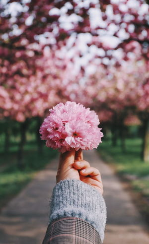 Human Hand Flower Head Flower Tree Springtime Holding Blossom Close-up Cherry Blossom Cherry Tree In Bloom Pink Color