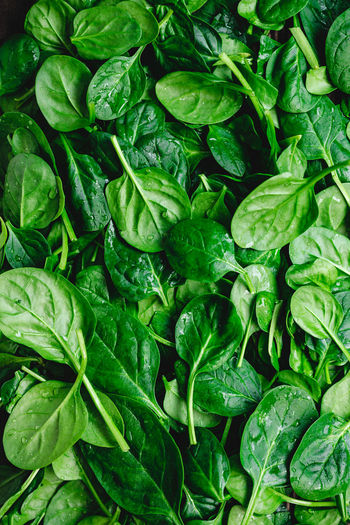 Green Color Food And Drink Food Vegetable Full Frame Healthy Eating Freshness Wellbeing Backgrounds Leaf Plant Part Spinach No People Raw Food Close-up Directly Above Organic Green Nature Leaf Vegetable Clean Dieting
