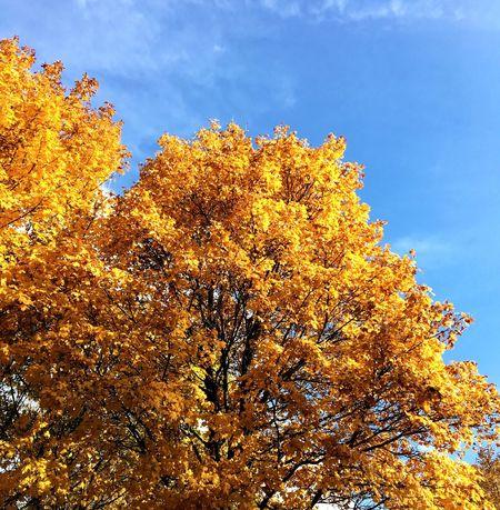 Dutch Dutch Landscape Trees Autumn Autumn🍁🍁🍁 Autumn Colors Yellow Yellow Leaves