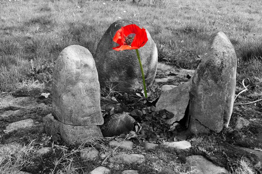 Blume Blumen Fé Nature Naturschönheiten Schönheit Wiese  Wohlfühloase Acker Blüten Die Farbe Rot Feuerstelle Flower Flowering Plant Marijuana Mohn Natur Rot Steine Steinhaufen Stonehenge Stones Sucht Wohlfühlen Wüstenblume