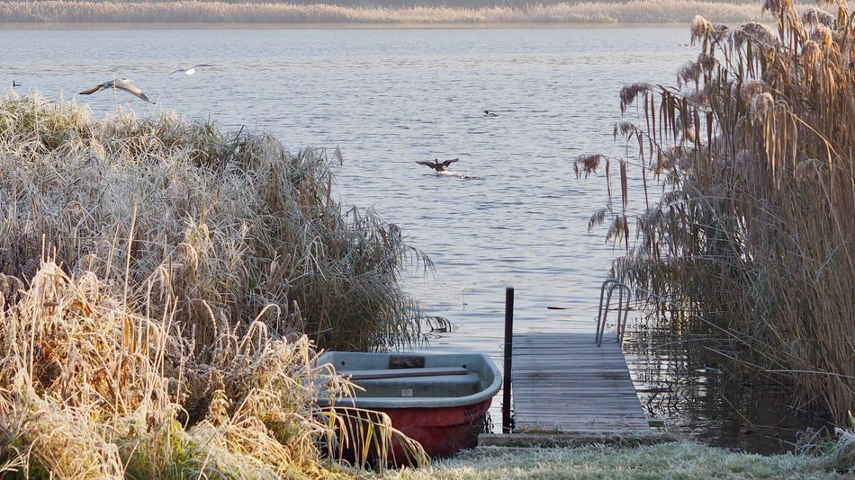 Beauty In Nature Boat Boot Frost Jetty, Pier Lake Nature No People Outdoors Wasservogel Water Waterbirds