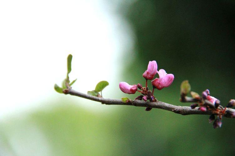 reach Spring Nature Arboretum Ucdavis Plant Life Blossom